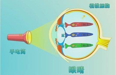 红光?蓝绿光?哪些光照与近视防控有关系(图)?